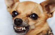 Как отучить собаку кусаться