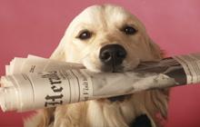 Обучение основным командам собаки, которая была подобрана на улице. Часть 3