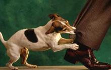 Не бейте собак – будут кусаться