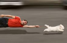 Проблемы взаимоотношений человека и собаки (не прошедшей курс послушания)