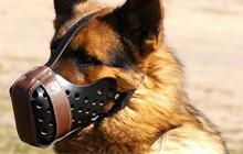Собаки подрались. 10 способов, как расцепить собак. Часть 2