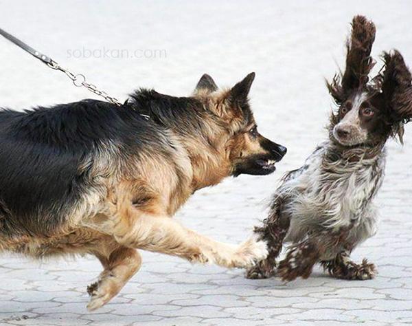 Способы расцепить собак