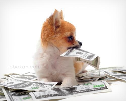 Деньги на собаку