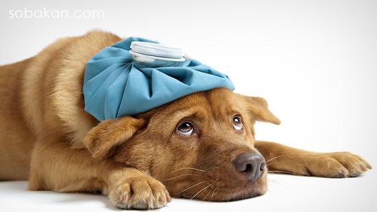 Самонеллез у собаки