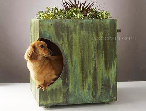 нора - домик для собаки
