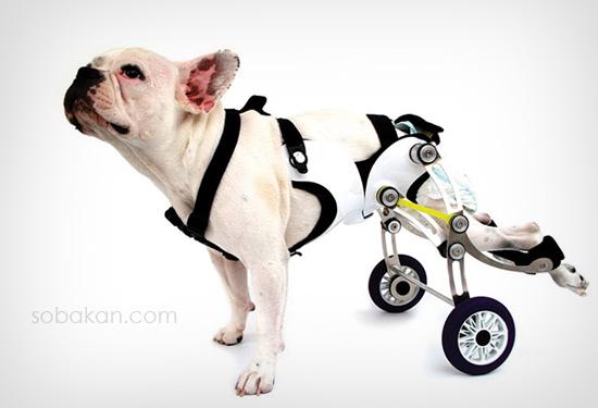 Паралич у собак