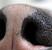 Пятна витилиго у собак. Почему пятнистый нос?
