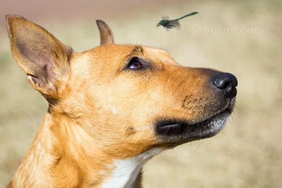 Собака и насекомые
