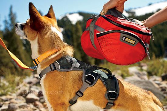 Собака с походным рюкзаком