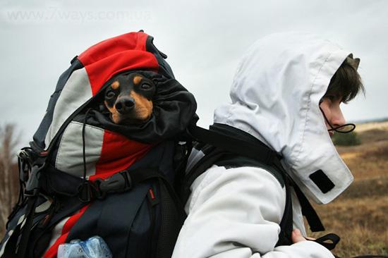 Собака в походном рюкзаке