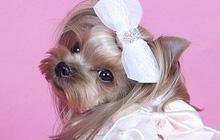 Клички для собак девочек (Часть 1)