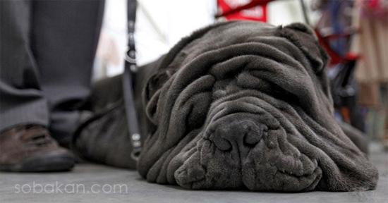 энтропия у собак