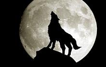 Эволюция собаки. Немного о волках