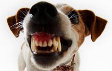 Укусила собака – что делать?