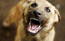 Бешенство у собак – симптомы и профилактика