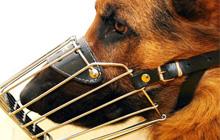 Намордники для собак — необходимость или прихоть