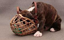 Намордники для собак — как выбрать