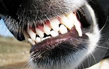 Собака укусила или неизбежное нападение – Как действовать?