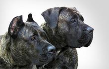 Опасные породы собак и причины их опасности