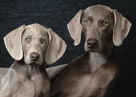 Собаки с выразительными ушами