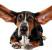 Чистка ушей собаке — основы