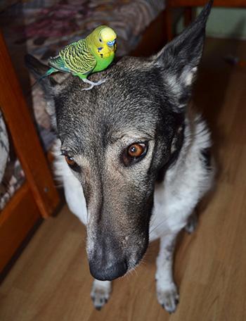 Бона и попугай