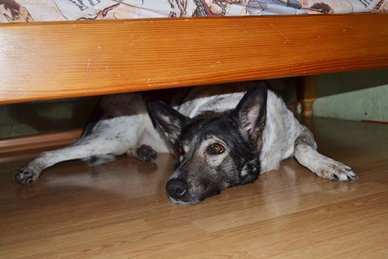 Бона под кроватью