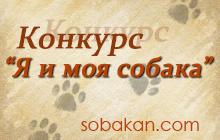 Конкурс «Я и моя собака»