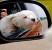 Влияние воздуха на здоровье собак