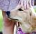 Почему собака толкается боком
