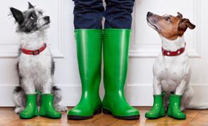 Как собаки понимают настроение человека
