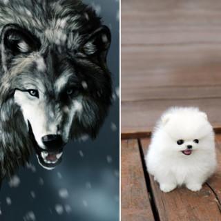 Прародители собак