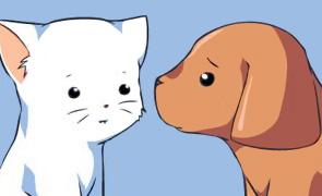 Кто умнее – кошки или собаки?