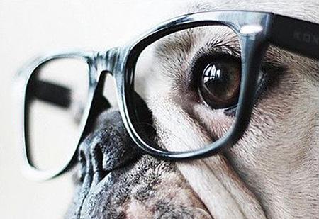Самая умная собака