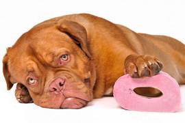 Проблемы с пищеварением у собаки