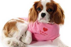 Сшить одежду для собаки – дело забавное