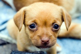 Как ухаживать за щенками