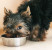Чем кормить собак, выбор корма