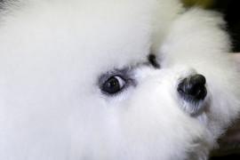 Уход за шерстью и когтями собаки