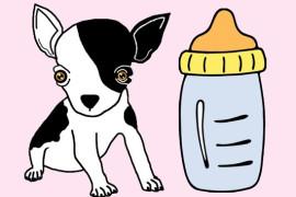 Питание щенков чихуахуа