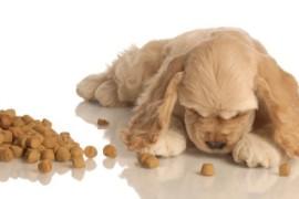 Чем кормить щенка спаниеля