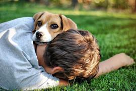 Я хочу собаку!