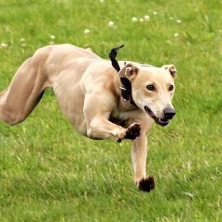 Как быстро и эффективно выгулять собаку