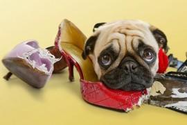 Почему нельзя наказывать щенка