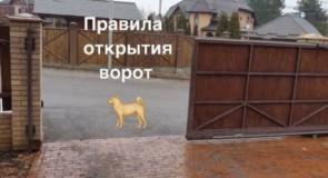 Правила открытия ворот Кане корсо Бафи. Дрессировка для безопасности